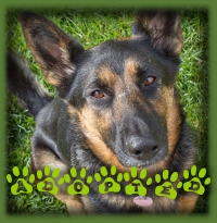 Blair′s foster dad loved her too much to part with her. She′s found her forever home in Waterloo.