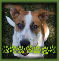 Patches has found his perfect family in Kitchener. He has a ShepX brother to show him the ropes. Just a wonderful home for him.