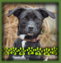 When the family of Miles, a previous PDR adoptee, told us that they were looking for a friend for Miles, we knew that Paige was the perfect fit. This family loves trick training and Paige (now Maisy) being an agile 7mth old Border Collie/Pug mix is super smart, all around friendly and the ideal fit for them.