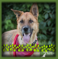 Arya found her perfect home in Cambridge with a young couple who were touched by her story of overcoming past neglect and wanted to offer her a secure and loving home where she will never know sadness again.
