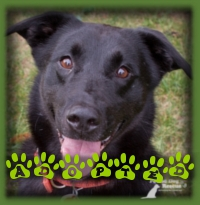 Austin will be moving to Etobicoke to join his forever family, we are so happy for him.