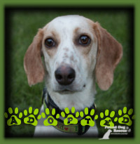 Ellie Mae found a perfect home in Conestogo with a couple looking for a buddy for their Spaniel X, Patsy Cline. The dogs adore each other and Ellie Mae has found her happily ever after.