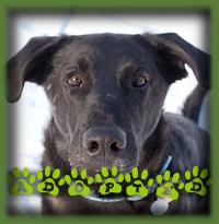 Reggie is a big city dog now! He′s the first dog for a fantastic Toronto couple and they couldn′t have picked a better dog to start with.