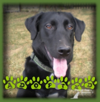 Jack was so popular he was adopted before he even made it to the website. Jack lives in Kitchener with a little Dachshund brother that he loves.