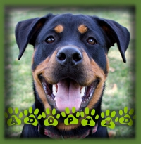 Emma found her forever family in Stoney Creek. She′s going to be a much loved member of the family.