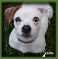 Pound Dog Rescue Drumbo